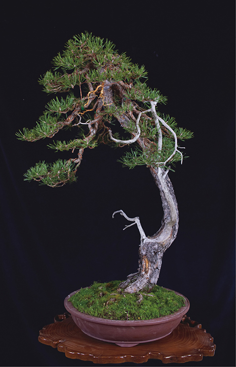 Enchanted By The Bonsai Universe The Government Of Japan Japangov